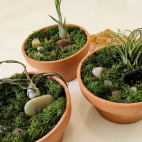Large Manifestation Gardens including Real Air Plant and Crystals
